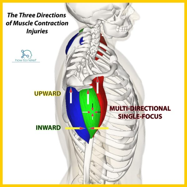 Deltoid: Origin, Insertion, Action & Nerve Supply » How To ...