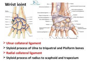Ellipsoid joints