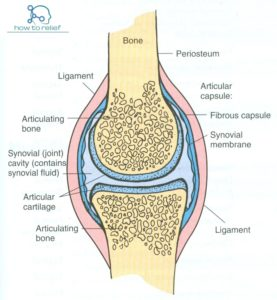 Synovial-Joint