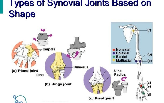 Synovial-Joint-classification