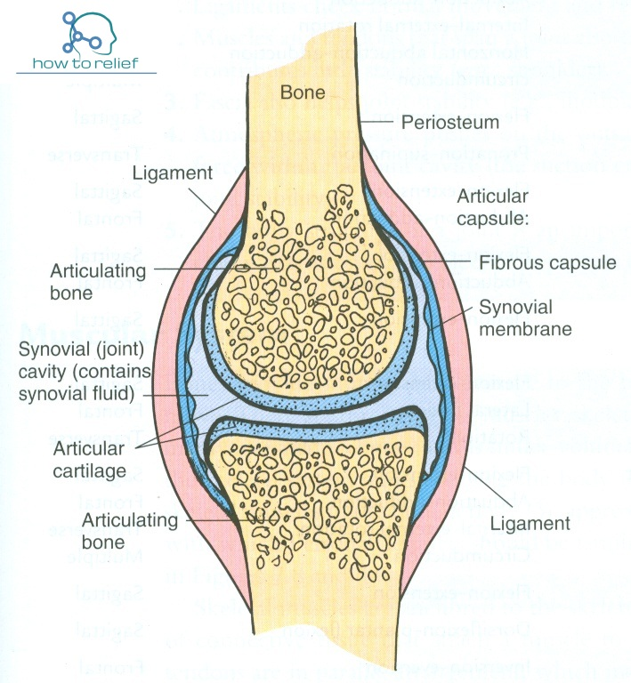 Synovial Joint Classification  Definition  U0026 Examples  U00bb How
