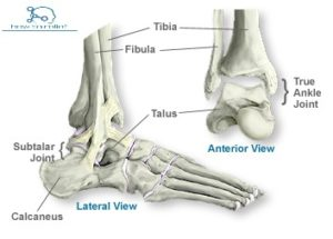 ankle joints
