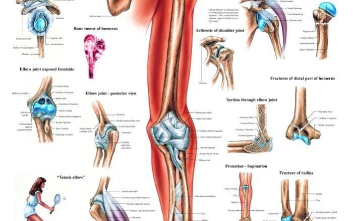 Luxury Anatomy Upper Limb Mcq Questions Festooning - Anatomy And ...