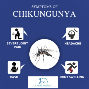 chikungunya fever treatment