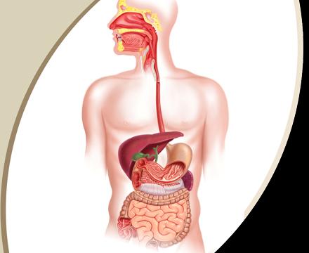 Gastroenterology Doctor List of Dhaka