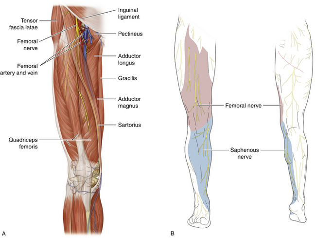 Femoral Nerve:Course,Motor & Sensory Innervation » How To ...