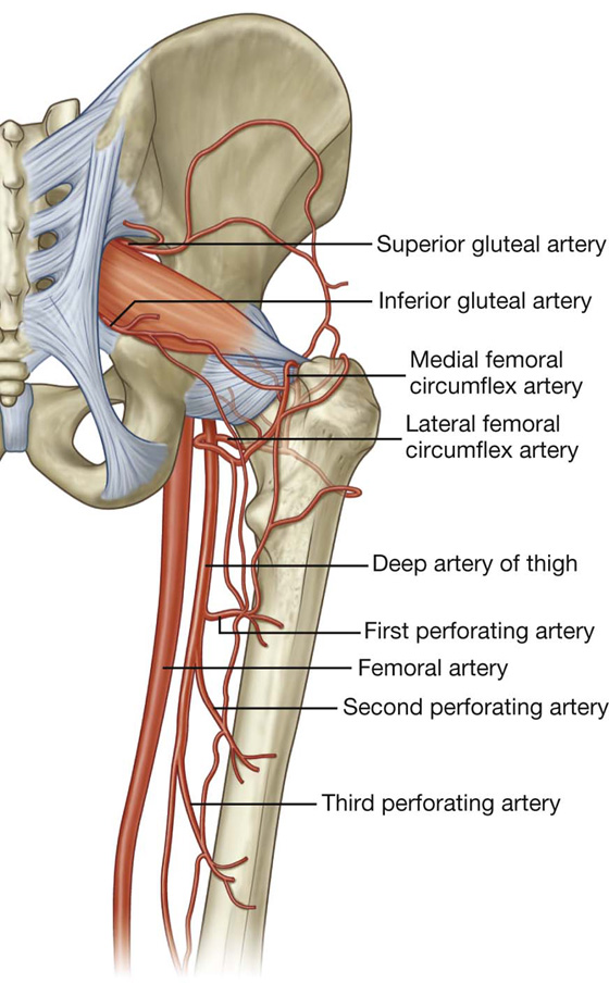 Hip Jointanatomymovement Muscle Involvement How To Relief