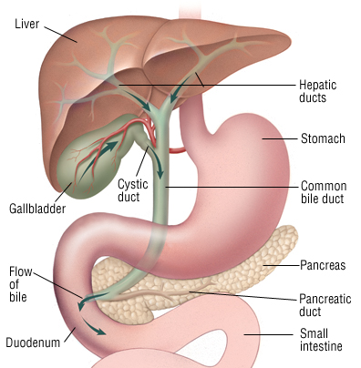 pancreas location
