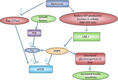Metformin-Dosages
